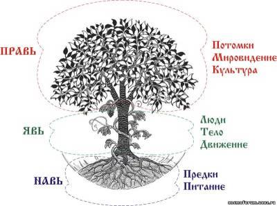 Древо Рода - фундамент Здравы