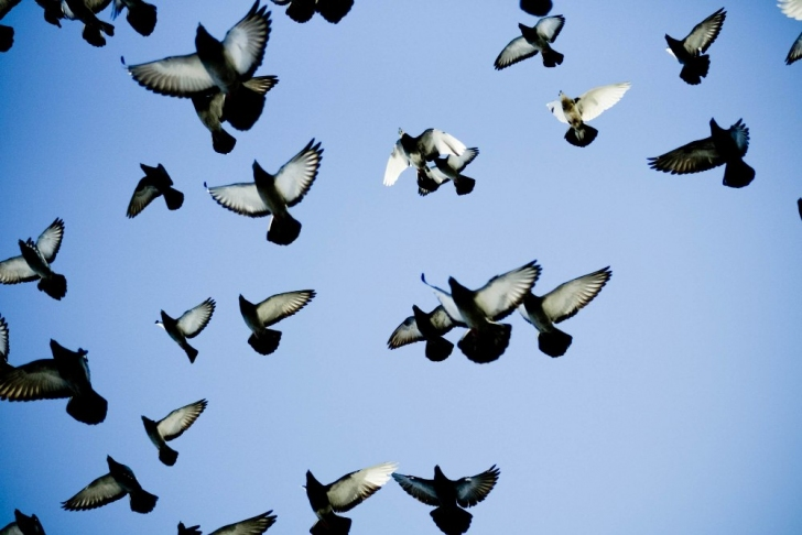 Как голуби чуть не сорвали знакомство с родителями моей невесты