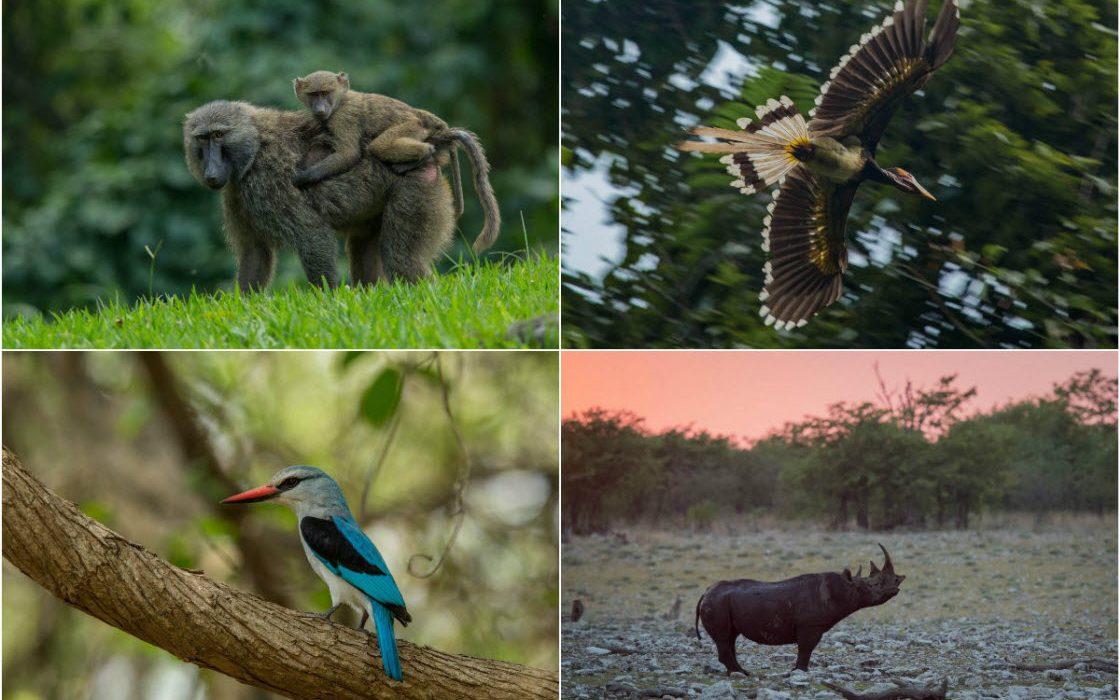 Фотографии животных от Чарльза Райана