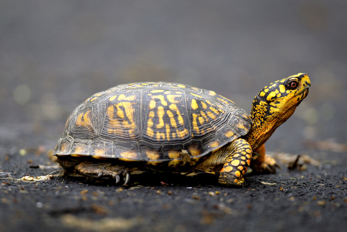 Is a turtle the right pet for your family?