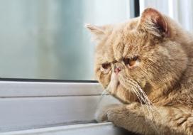 КОШКИН ДОМ. Кошка и улица: кто кого?