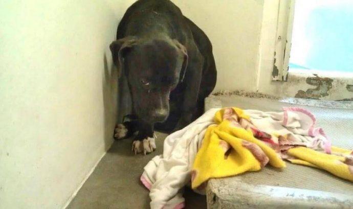 Он лежал и смотрел в пол, ожидая врачей с последним уколом… Но неожиданно пёс увидел животное, которое перевернуло его жизнь