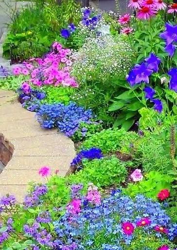 Какие декоративные растения посадить на даче