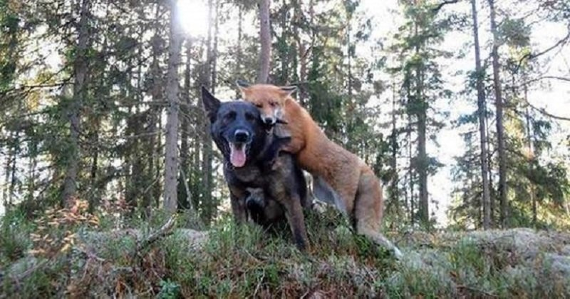Пес начал каждый день бегать в лес. Хозяин решил узнать, в чем дело