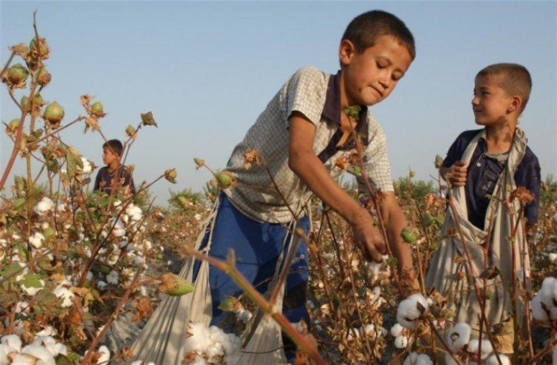 8. В Узбекистане тоже до сих используют детский труд Жуткие снимки, Трогает до слёз, дети, детский труд, рабство