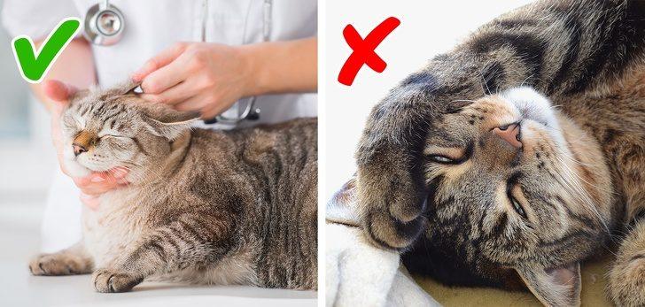 Признаки плохого самочувствия кошек