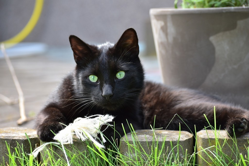 Кот - истинный джентельмен