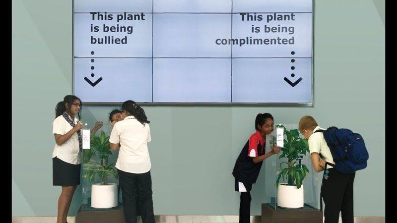 Что произойдет, если ругать растение 30 дней? ikea, растение, результат, травля, ученик, школа, эксперимент