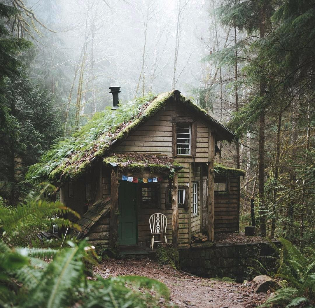 Убежище в лесу