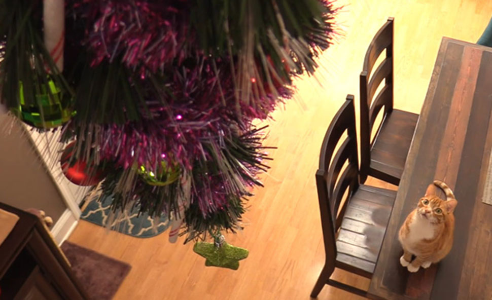 Как защитить новогоднюю елку отвредных идерзких домашних животных