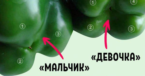 Как правильно выбирать болгарский перец