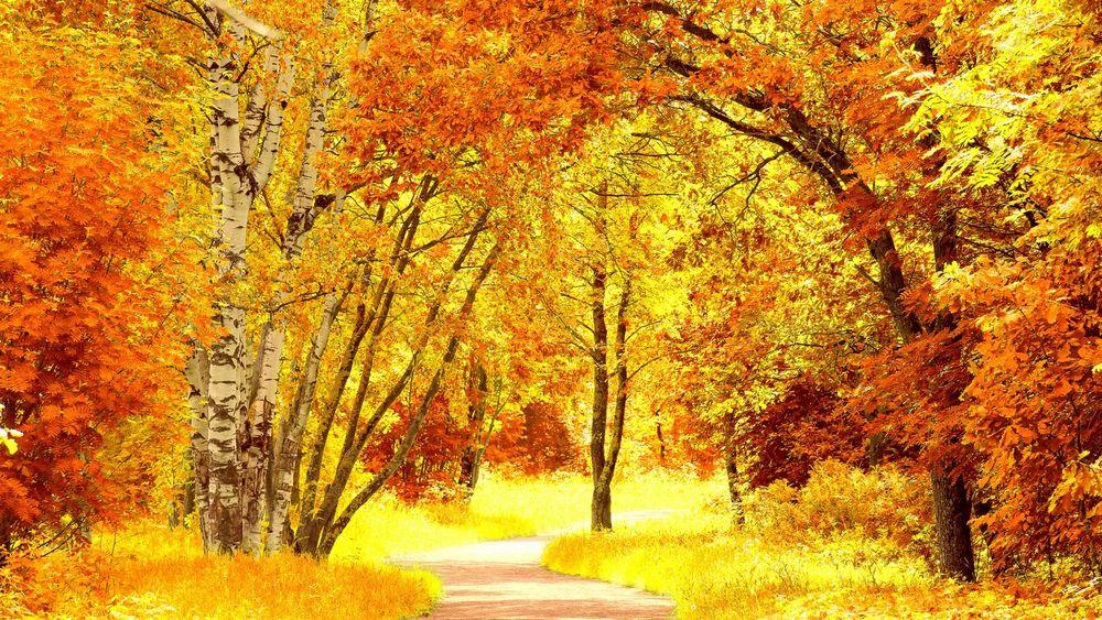 Картинки по запросу осенний лес