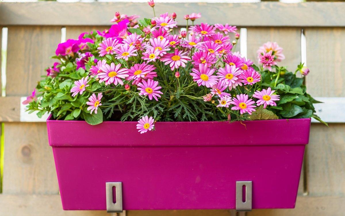 12 ошибок, которые вы совершаете при выращивании растений в контейнерах