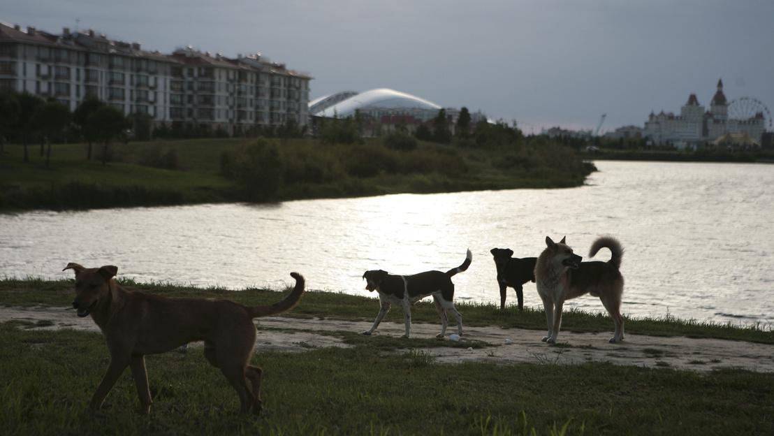 Перед ЧМ русские истребляют бродячих собак в промышленных масштабах