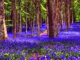 Краски леса (релакс)