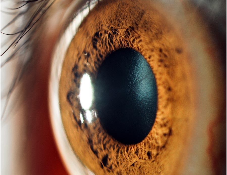 124 15 фактов о глазах, которые вас поразят