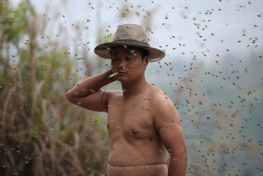 456 тыс. пчел творят чудеса