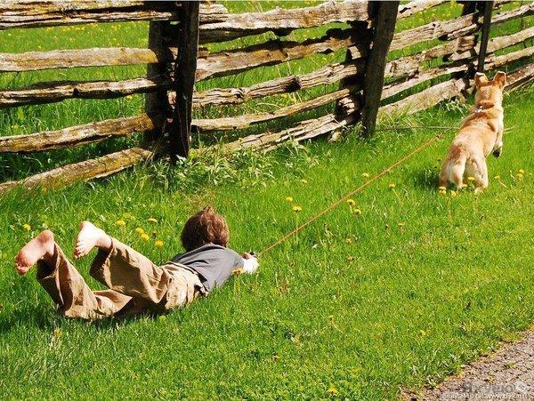 Собаки и дети. Ребенку трудно ÑправитьÑÑ Ð´Ð°Ð¶Ðµ Ñ Ð¼Ð°Ð»ÐµÐ½ÑŒÐºÐ¾Ð¹ Ñобакой