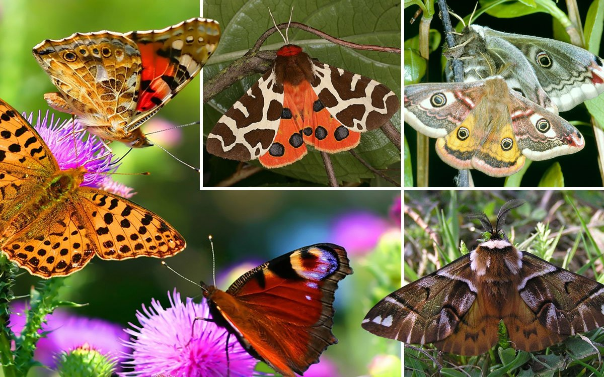 Бабочки: борьба или мирное соседство