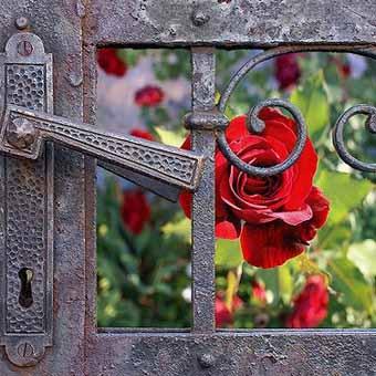 http://idealsad.com/wp-content/uploads/2013/09/foto-zaborov-s-cvetami27.jpg