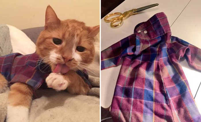 Самый модный кот: девушка шьёт стильную одежду для кота-аллергика, чтобы облегчить ему жизнь