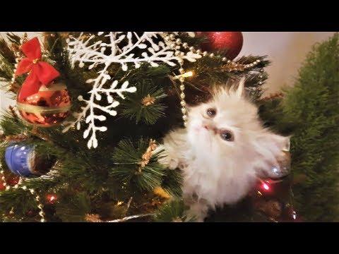Новогодние видео приколы с животными Животные и питомцы против ёлок СОБАКИ и КОШКИ Pets vs christmas