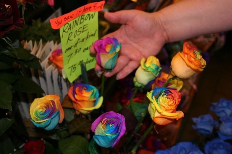 Как вырастить радужную розу из семян в домашних условиях