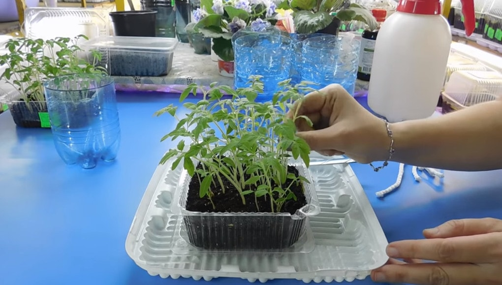 Супер-метод выращивания тома…