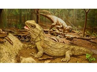 Эволюция монстров: естественный отбор беспощадно уродует животных