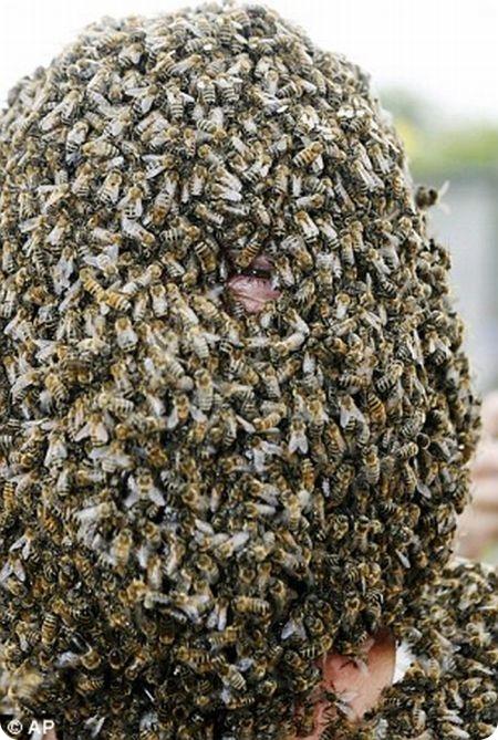 В городе Онтарио, в Канаде, провели традиционное соревнование Лучшая борода из пчел