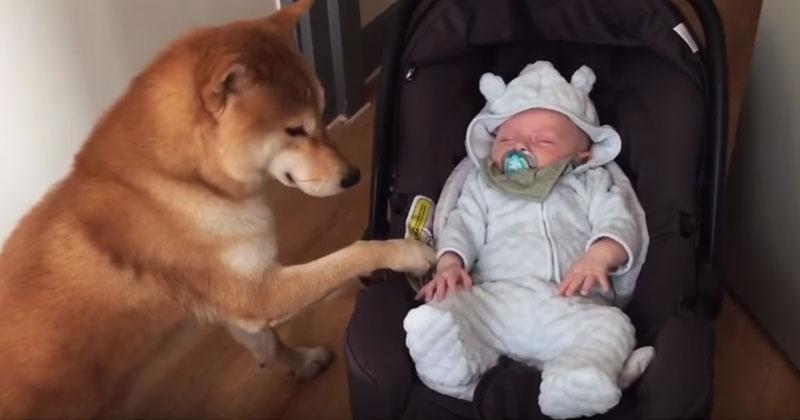 Собака подошла к люльке и ст…