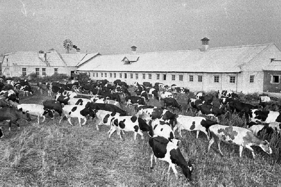 Как  СССР страдал без  мяса: только факты