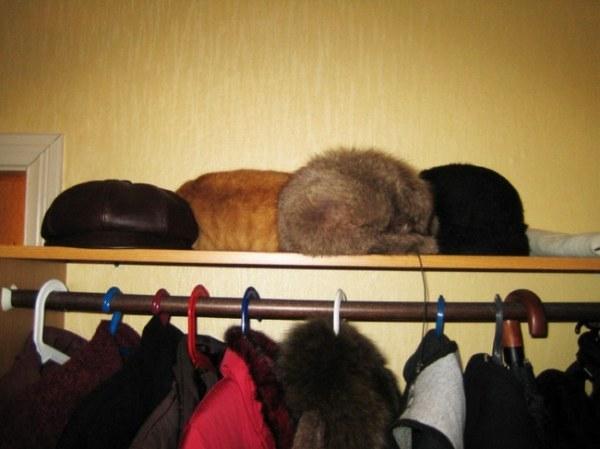 Тест на внимательность – найди кота! )))