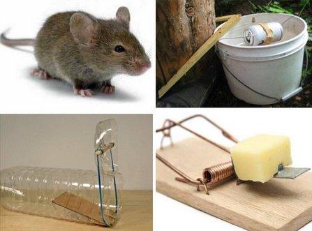 Избавляемся от мышей на участке навсегда