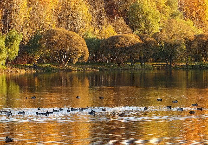 Старинный усадебный парк Покровское-Стрешнево