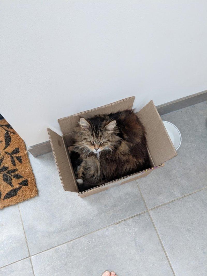 Уиллоу очень дружелюбная кошка, она частенько ходит в гости и к другим соседям, которые её подкармливают в мире, история, люди, поклонник, цветы