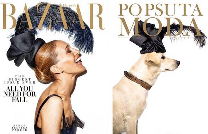 """Кампания """"Po Psu Ta Moda"""", с помощью которой собаки из приюта обретают дом"""