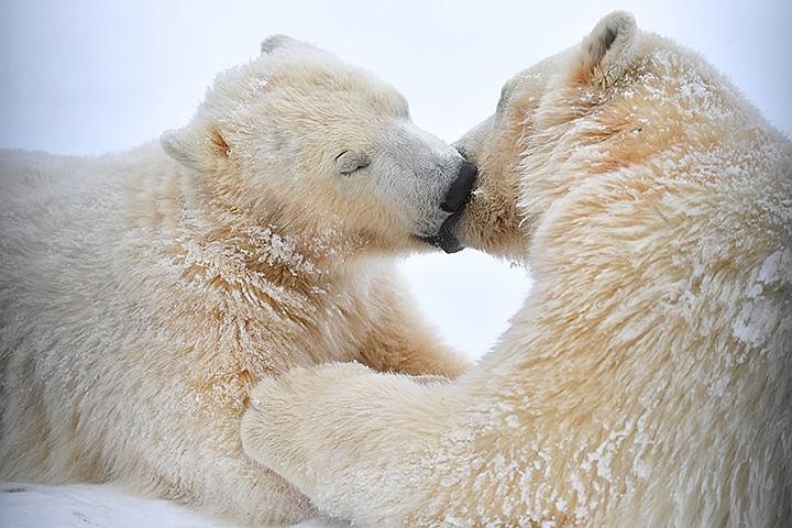 Московский зоопарк дарит 40% скидку на новогодние билеты
