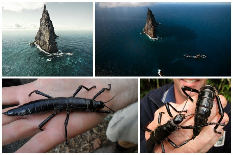 Одним из красивейших природных достопримечательностей Австралии является древнейший вулканический остров Болс-Пирамид - высочайший на Земле вулканический утёс жизнь, земля, интересное, необитаемые острова, факты