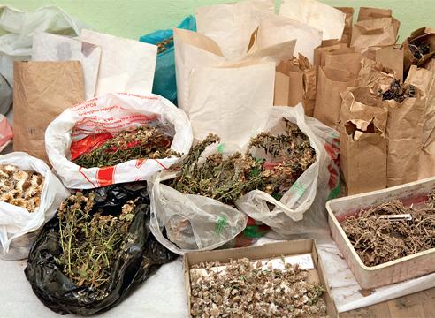 Сбор семян, сухоцветы