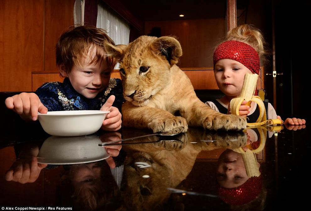 Животные ведут себя как люди