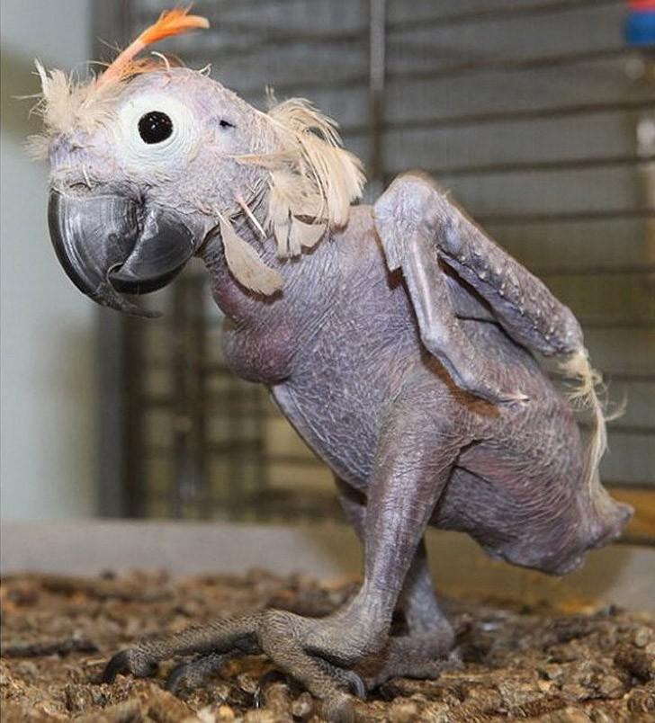 baldanimals01 Забавное и странное зрелище: облысевшие животные