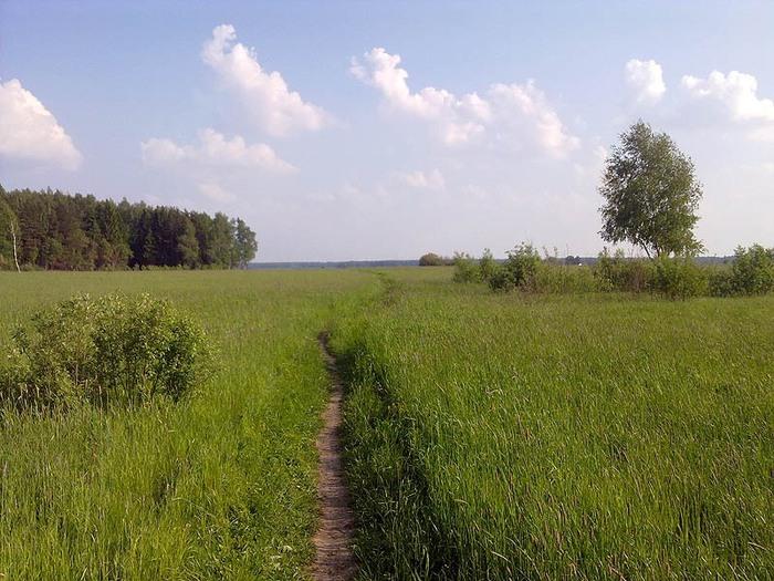 травы (700x525, 133Kb)