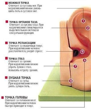 Массаж ушей укрепит детский иммунитет