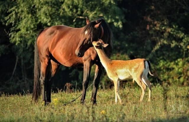 Эмоции и настроение в фотографиях животные, поцелуи, юмор