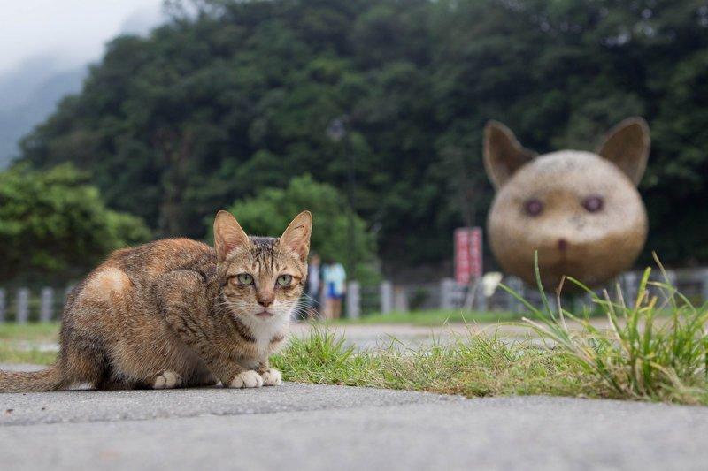 Самые кошачьи города мира: Новый Тайбэй, Тайвань