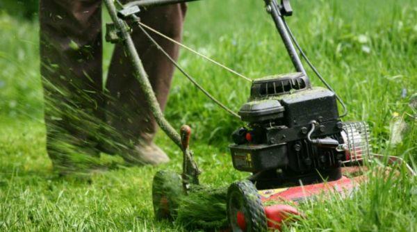 5 ошибок в уходе, которые губят ваш газон