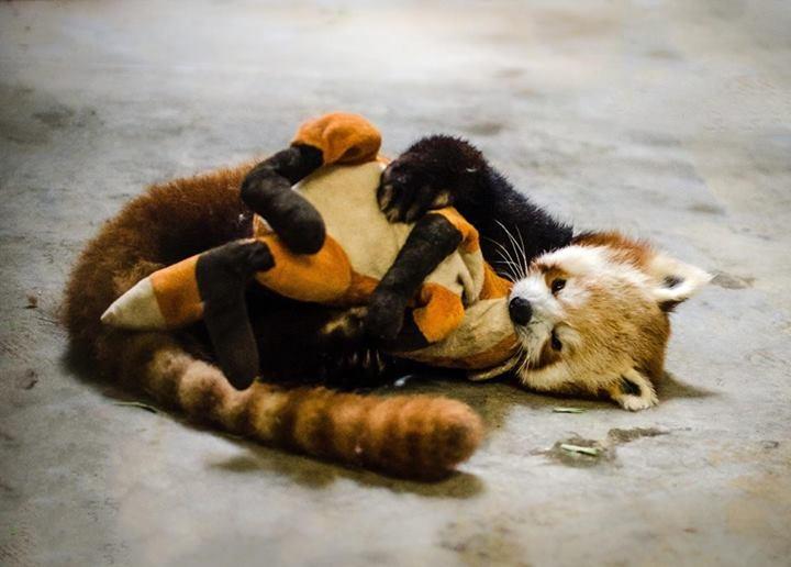 фото с воюблёнными зверятами