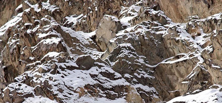 Camouflage17 Животные   мастера маскировки