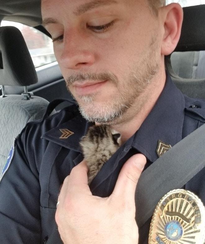 Кошка унесла котенка, и мужчина потратил два дня, чтобы отыскать малыша, оставшегося в одиночестве